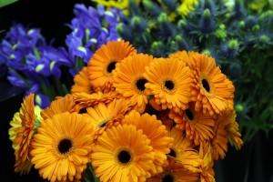 Scarecrow Flowers_2707