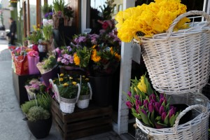 Scarecrow Flowers_2742