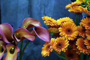 Scarecrow Flowers_2769